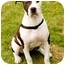 Photo 2 - American Staffordshire Terrier/Pointer Mix Dog for adoption in Marina del Rey, California - Elsie