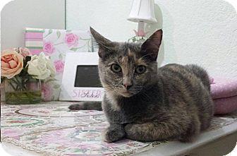 Domestic Shorthair Kitten for adoption in El Campo, Texas - Sassy
