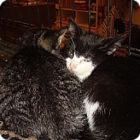 Adopt A Pet :: Maybelline - Brooklyn, NY