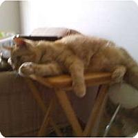 Adopt A Pet :: Tucker - Richfield, OH
