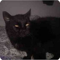 Adopt A Pet :: Kate - Greenville, SC