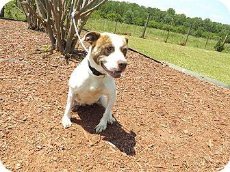 American Pit Bull Terrier Mix Dog for adoption in Thomaston, Georgia - Cassie