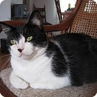 Adopt A Pet :: Annie - Leamington, ON