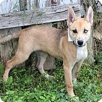 Adopt A Pet :: Karo - Dalton, GA