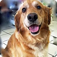 Adopt A Pet :: Willow II - BIRMINGHAM, AL
