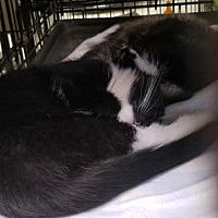 Adopt A Pet :: Oliver - Anderson, IN