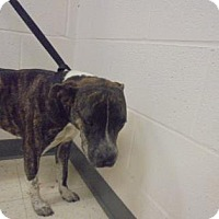 Adopt A Pet :: Miley - Gulfport, MS