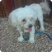 Adopt A Pet :: Nacho - Santee, CA