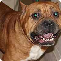 Adopt A Pet :: HANK - Clayton, NJ