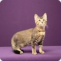 Adopt A Pet :: Jemima Puddle-Duck - Cary, NC