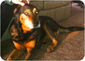 Shepherd (Unknown Type) Mix Dog for adoption in Council Bluffs, Iowa - Princess