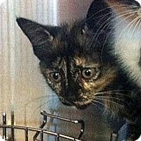 Adopt A Pet :: Audrey - Secaucus, NJ