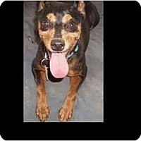 Adopt A Pet :: Battie - Phoenix, AZ