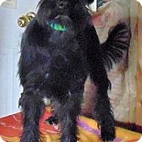Adopt A Pet :: Mollie - Crystal River, FL