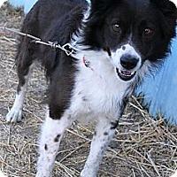 Adopt A Pet :: Dodger - Salt Lake City, UT