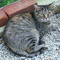 Adopt A Pet :: Fiona - Lenhartsville, PA
