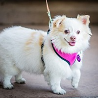 Adopt A Pet :: Nellie D5118 (was D2617 - Fremont, CA