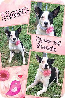 Terrier (Unknown Type, Medium) Mix Dog for adoption in Lexington, North Carolina - Chismosa (Mosa)