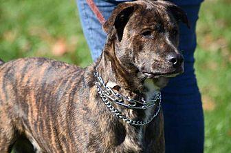 Shepherd (Unknown Type) Mix Dog for adoption in Millersville, Maryland - Linus