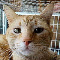 Adopt A Pet :: Willie - Morganton, NC
