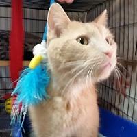 Adopt A Pet :: Mr. Tigger - Jackson, MO