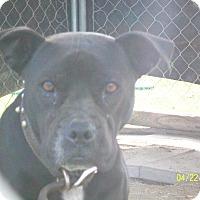 Adopt A Pet :: Luna - Mexia, TX