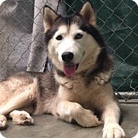 Adopt A Pet :: Sky - Roswell, GA