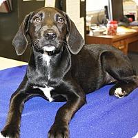 Adopt A Pet :: Tacoma - Sparta, NJ