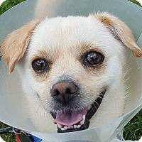 Adopt A Pet :: Daniel - Grayslake, IL