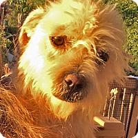 Adopt A Pet :: Mr. Zeke - Poway, CA