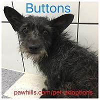 Adopt A Pet :: Buttons - Agoura Hills, CA