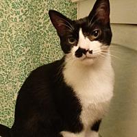 Adopt A Pet :: Addie - Waldorf, MD