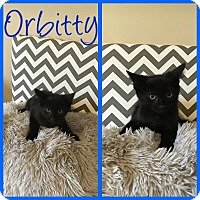 Adopt A Pet :: Orbitty - Covington, KY