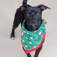 Adopt A Pet :: Ziggy - Madison, GA