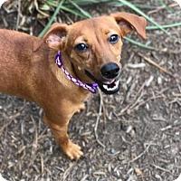 Adopt A Pet :: Nathan - Princeton, MN