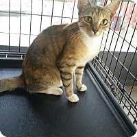 Adopt A Pet :: Galaxy - Mims, FL