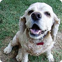 Adopt A Pet :: Harlo - Sacramento, CA