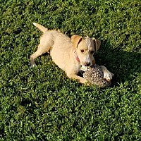 Adopt A Pet :: Kameo - Wilmington, DE