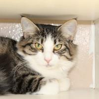 Adopt A Pet :: FluFlu 546-17 - Cumming, GA