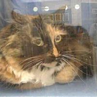 Adopt A Pet :: DARLA - Albuquerque, NM