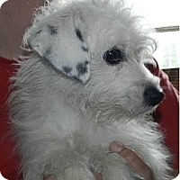 Adopt A Pet :: Mopsy - Clinton, ME