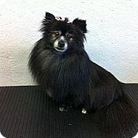 Adopt A Pet :: Mamma Mia - Saskatoon, SK