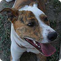 Adopt A Pet :: Tigger #5187 - Jerome, ID