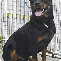 Adopt A Pet :: Apollo - Pembroke Pines, FL