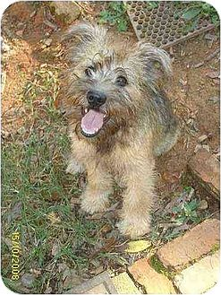 Border Terrier/Terrier (Unknown Type, Medium) Mix Dog for adoption in Lincolndale, New York - Trevor