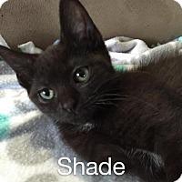 Adopt A Pet :: Shade - Norwich, NY