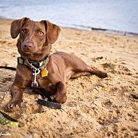 Adopt A Pet :: Duke - Orange, CA