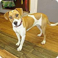 Adopt A Pet :: 17-d06-006 Gidget - Fayetteville, TN