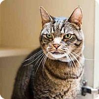 Adopt A Pet :: HERBIE - Murray, UT