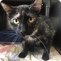 Adopt A Pet :: Elaine - Jackson, MI